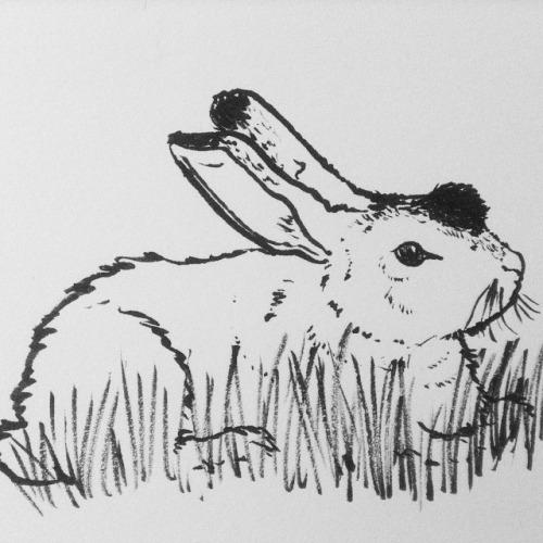"Thlayli/Bigwig from Richard Adam's ""Watership Down""."