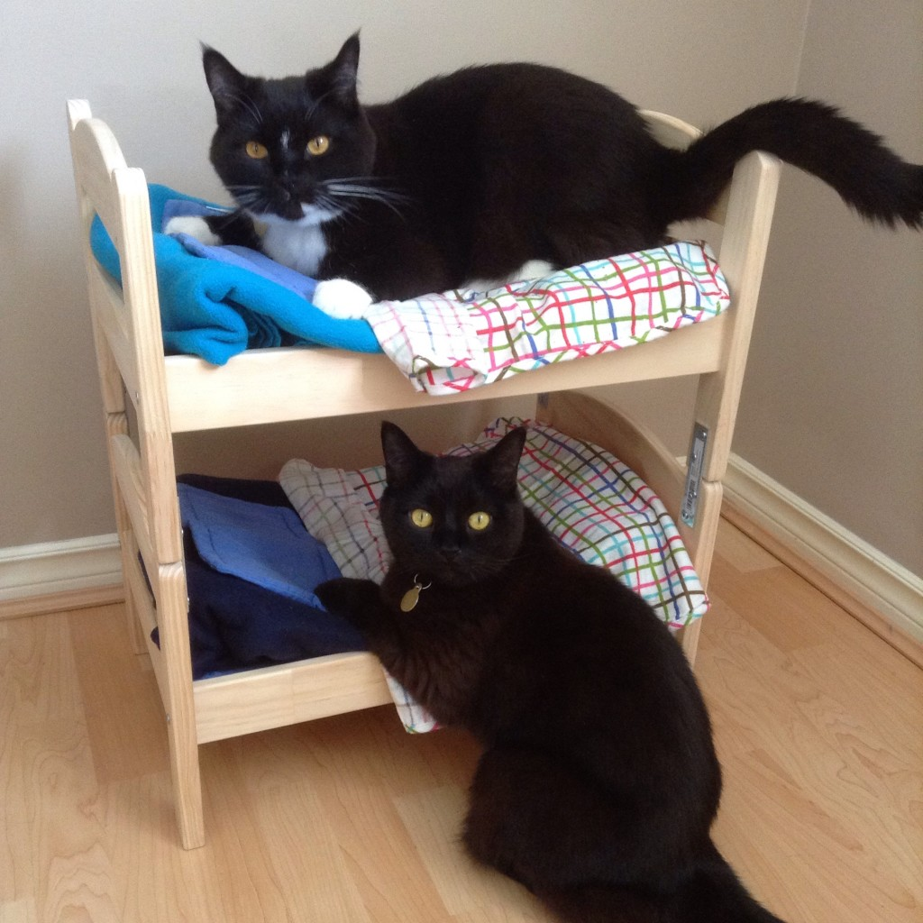 make a cat bunk bed